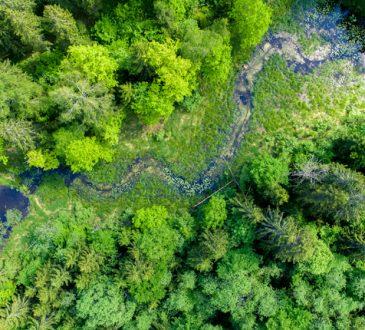 Ispra: Italia all'avanguardia nella difesa dell'ambiente! Sarà vero?